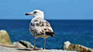 seagull-4263086_1920